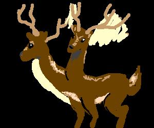 Siamese twin deer.