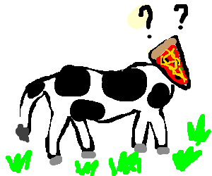 Pizza-headed cow is confused.