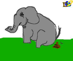 Elephant takes poo on the Discovery channel