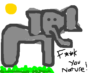 elephant shows its disrespect