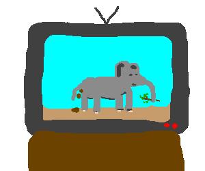 Elephant on TV
