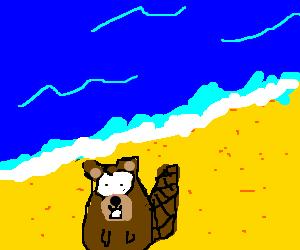 beaver on da beach