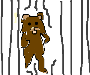 Wild pedo bear broke free!