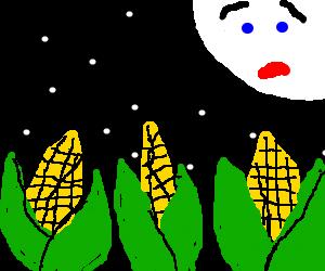 Three corn stalks under a surprised moon