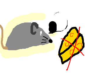 mouse doesnt like its cheese