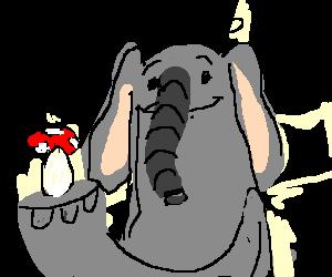 Elephants do LOVE mushrooms!
