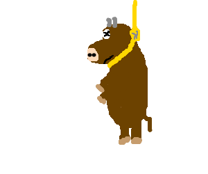 Suicidal cow