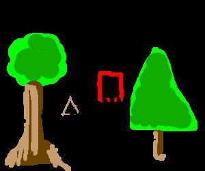 two trees doing their geometry homework