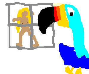 a peeping toucan