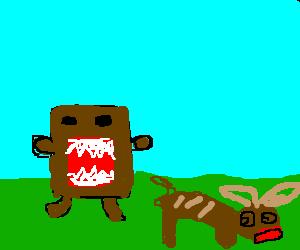Domo chases prey