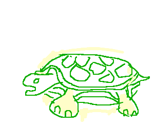 A turtle.