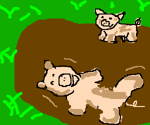 Pigs roll in the mud