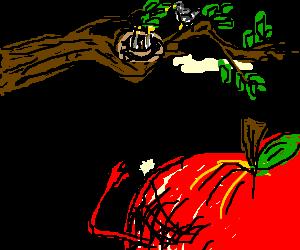 mr apple goes bird watching