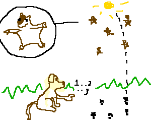 Dog counting shadows of flying squirrels
