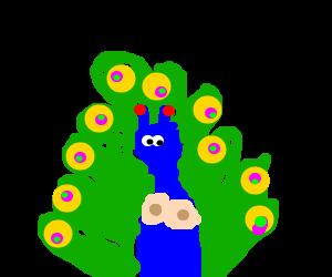 Sexy peacock