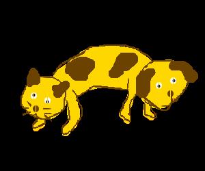 just a feline canine little catdog