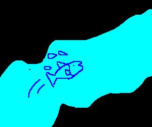 Fish struggling in the river