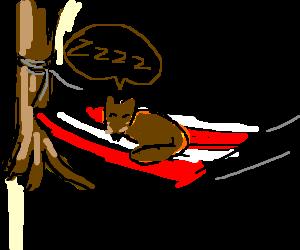 A brown fox sleeps on a hammock