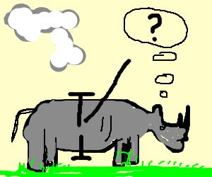 Rhino wonders if shes too fat.