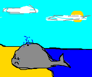 Whale so sad it wants to die on beach