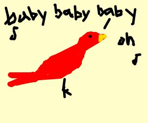 Pretty bird sings Justin Bieber song