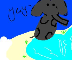 Elephant gleefully jumps into icy lake.