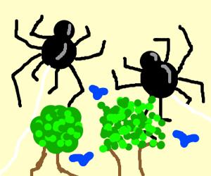 2 spiders, 2 trees, 3 birds