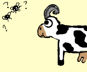 cow with ram horns chews.flies confused
