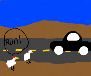 Chickens play chicken