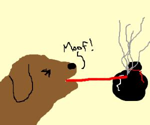"""Moof"".  Dog Lasers a garbage bag."