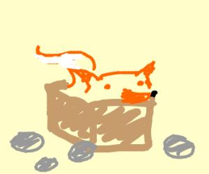 Fox in a box near some rocks