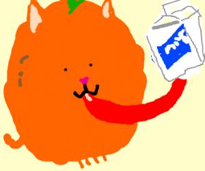 Anosmiac orange cat laps spoiled milk
