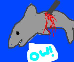 bleeding shark says ow!