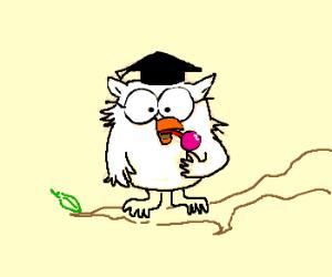 owl with a lollipop