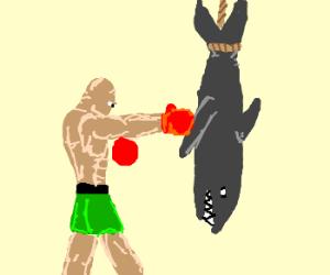Boxing a shark