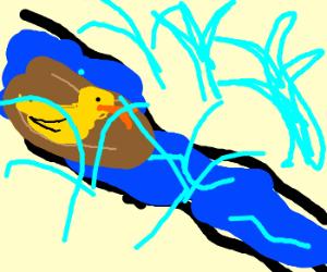 duck takes ride down splash mountian