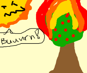 the sun burns apple tree maliciously