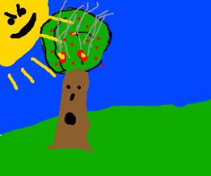 Angry Sun burns apple tree