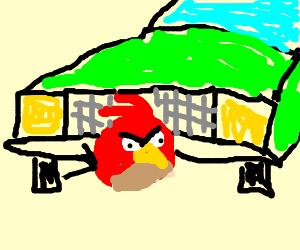 Angry bird roadkill