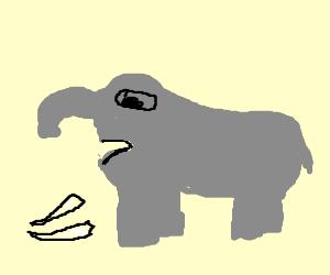 possesed elephants teeth falling out