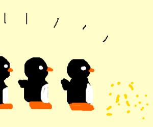 queue of pigeons wait for bread crumbs