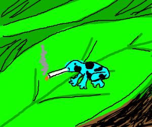Dendrobates auratus smoking cigarette