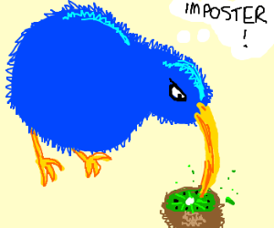 Grumpy blue bird eats kiwi fruit