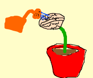 Watering a brain plant