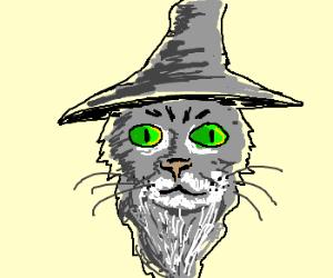 grey wizard cat