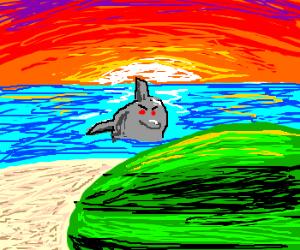Dolphin eyes watermelon on beach