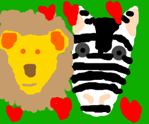 A lion and zebra in love