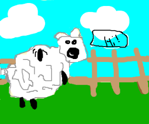 A sheep at the Animal Farm