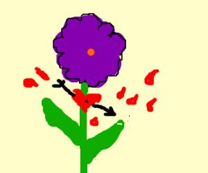 Purple flower stabbed in the 'heart'