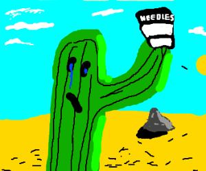 sad cactus lost all its needles